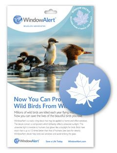 Best Birds Images On Pinterest Birdwatching Decals And - Invisible window decals for birds