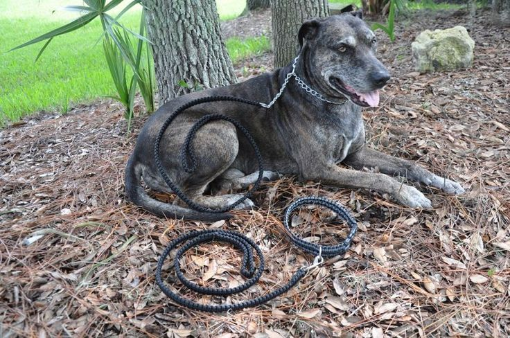 How to Make A Paracord Dog Leash: Tips And Gudelines