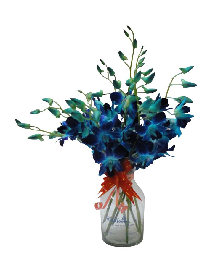 With their frilly, delicate blossoms and exotic speckled centers, orchids are one of the most elegant flowers. And this simple but beautiful display of ten Blue Dendrobium Orchids is an all-purpose gift for any occasion.
