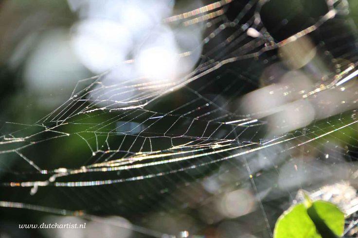Art of Nature in my garden Spiderweb