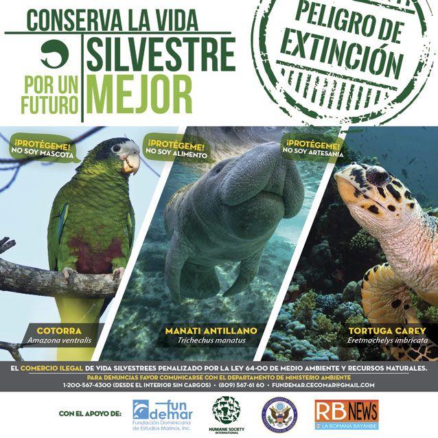 Ms de 25 ideas increbles sobre Especies en peligro de extincin