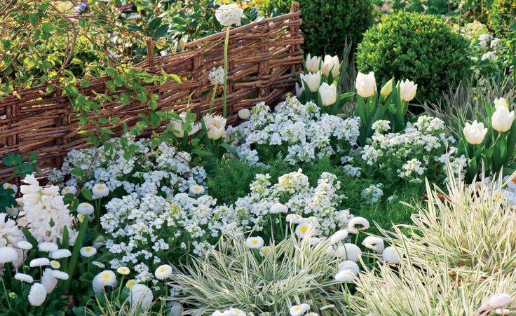 Vor allem im Winter freuen wir uns über helle Blüten, die sich trotz Eis und Kälte hervorwagen. Und auch danach sorgen weiße Pflanzen im Garten für Leichtigkeit und Eleganz.