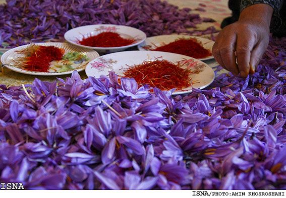 The worldwide saffron consumption needs are supplied by Iran, a provincial trade official said Monday, reminding that Iran produces over 96% of global saffron production.