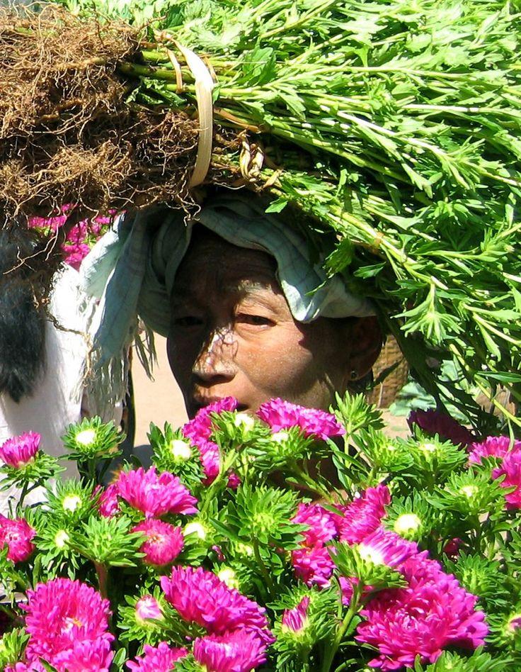 Marché aux fleurs, Kalaw, Birmanie