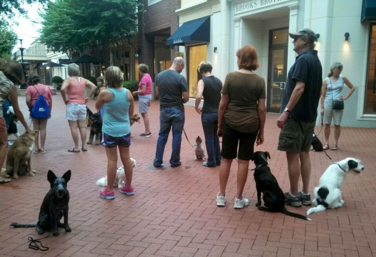 Pack walk at Stony Point Mall, August, 2013!