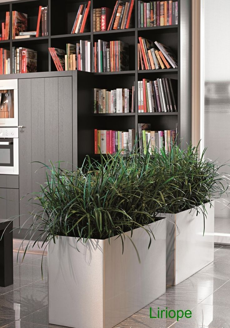 17 best images about office plants on pinterest hedges Best small office plants