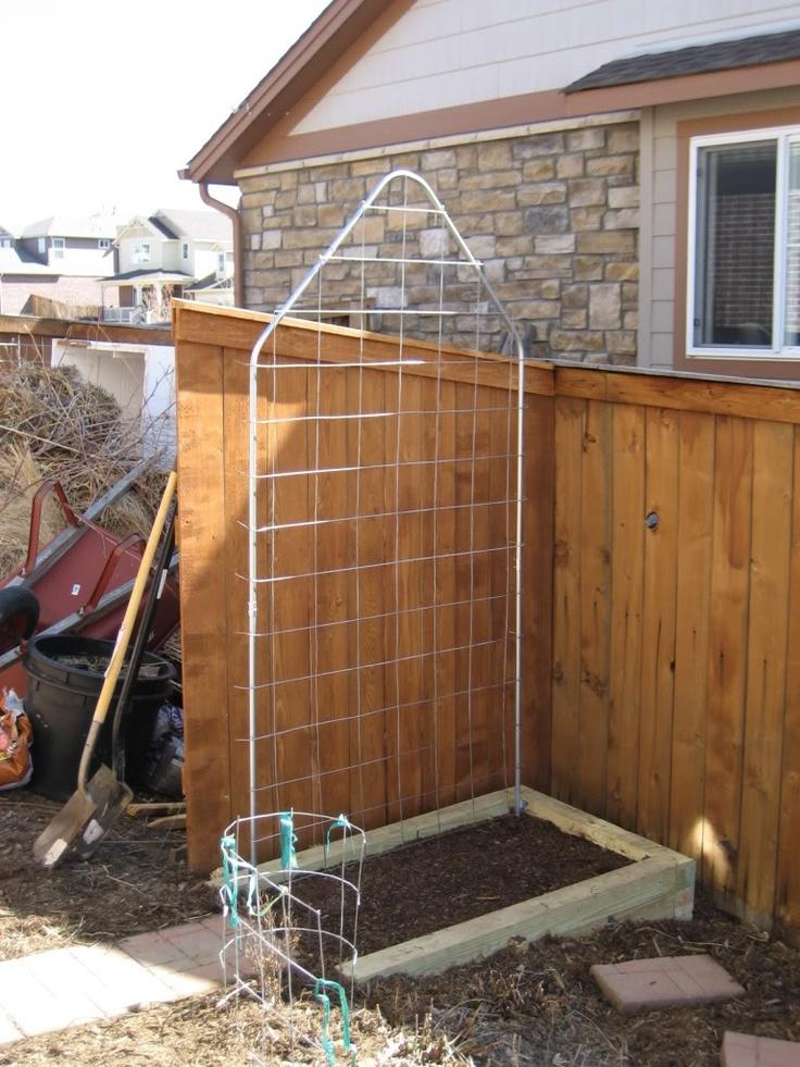 Ideas for cucumber trellises vegetable gardening forum for Vegetable garden trellis designs