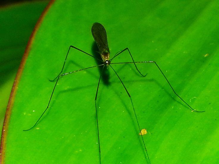 die besten 25 best insect repellent ideen auf pinterest hausfliegen t ten ameisen hausmittel. Black Bedroom Furniture Sets. Home Design Ideas