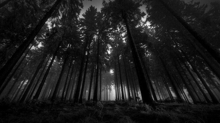 Reincarnated As The Villainess 4th In 2020 Dark Desktop Backgrounds Forest Wallpaper Dark Wallpaper