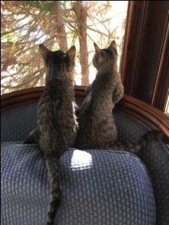 Dizzy and Miles Update: Here are Miles and Dizzy watching a cardinal in the tree. They are very happy in their new home!