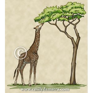 type of tree for giraffe to be eating cool things pinterest to be trees and of. Black Bedroom Furniture Sets. Home Design Ideas