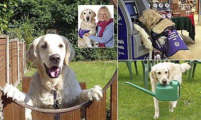 """""""Mi vida en tus patas""""... todos hemos oído sobre perros de terapia, pero la historia ..."""
