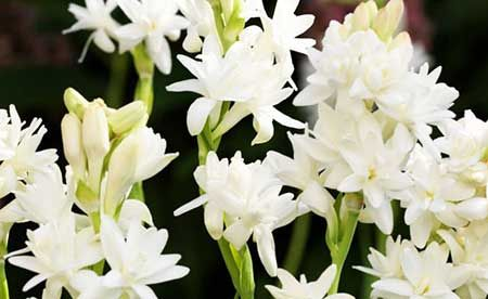 Flores Comestíveis: Nomes, Exemplos, Fotos, Dicas, Sugestões