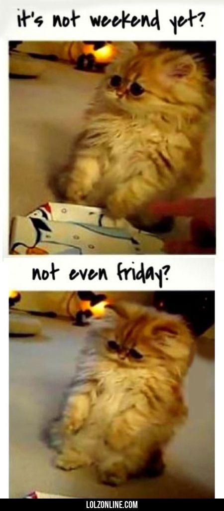 It's Not Weekend Yet?