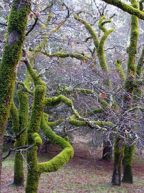 mosses and trees relationship questions