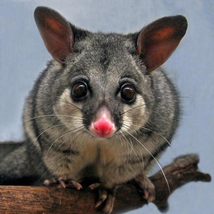One determined green thumb believes she has found an environmentally friendly way to stop possums from destroying her garden.