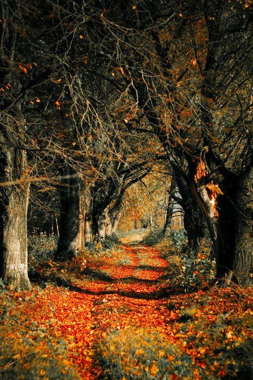 Autumn Rust, Latvia  photo via therelease
