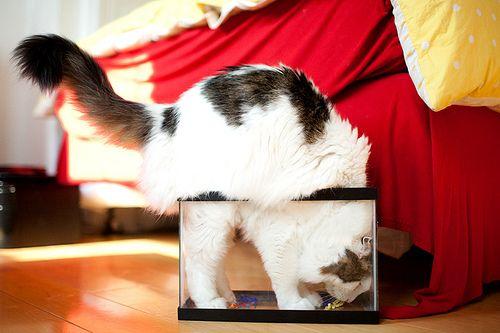 cat in a box again: Da Fish, Gone Fish, Funny Things, Cat Pics, Cat Tasting, Cat Caper, So Funny, Cat Lovers, Crazycatladi Othercritt