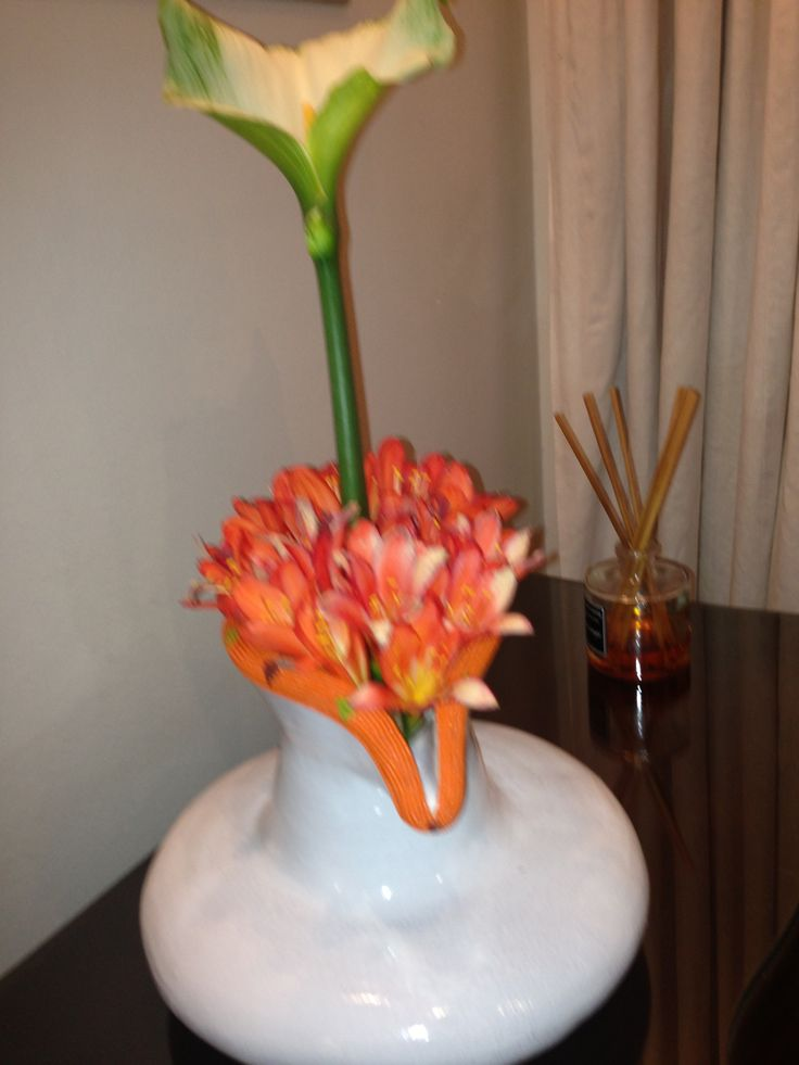 Lily and Clivia from my garden loving spring