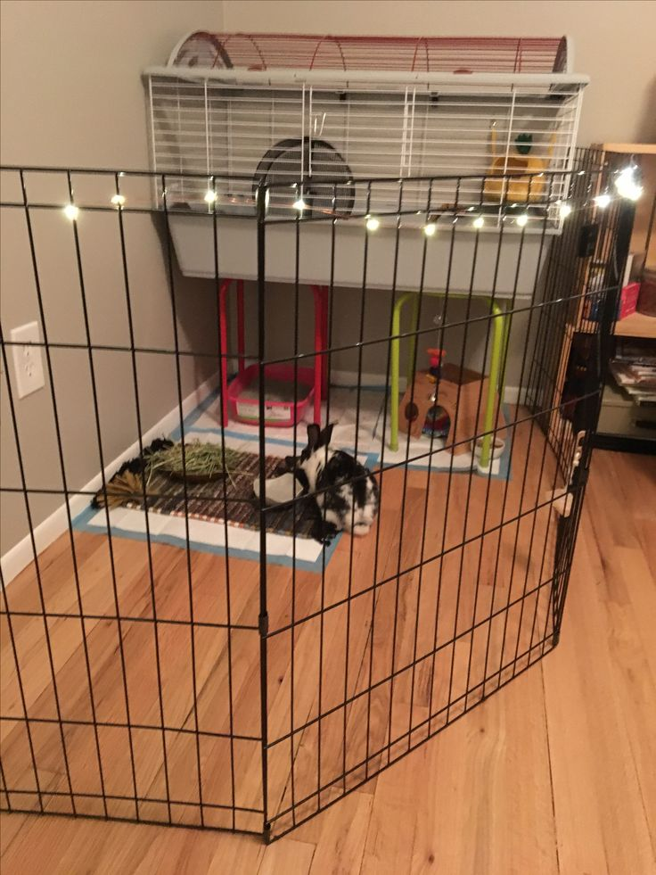 10 best Bunny cage, rabbit cage, house bunny cage, house ... Hedgehogs As Pets Cages