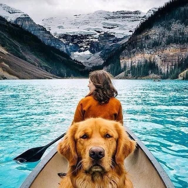 Canoeing with dog                                                                                                                                                                                 More