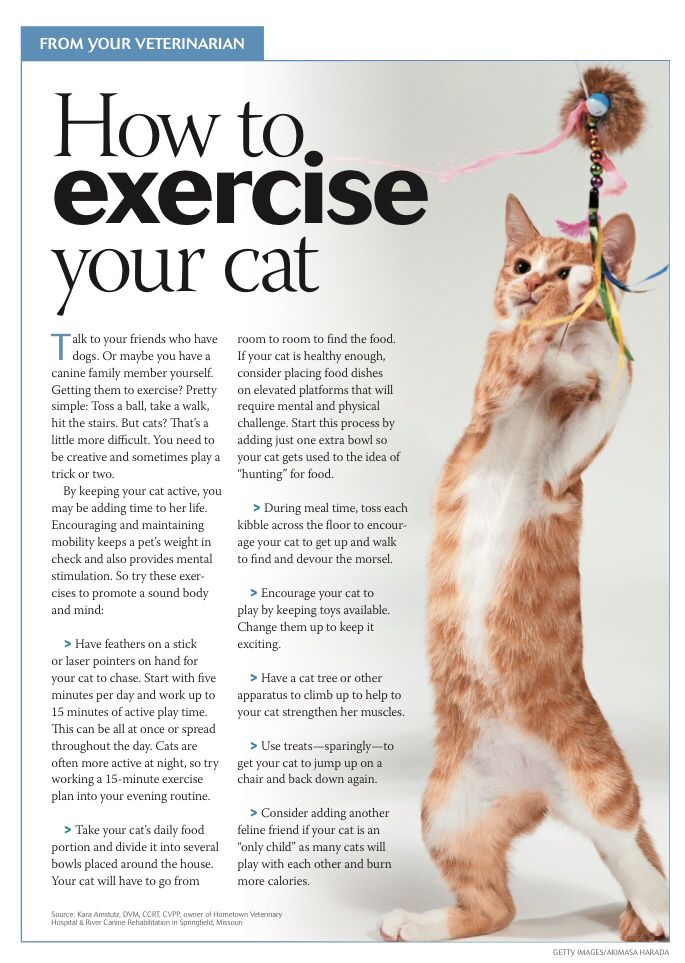 How To Exercise Your Cat Pet Clinic Animal Hospital Pet Vet