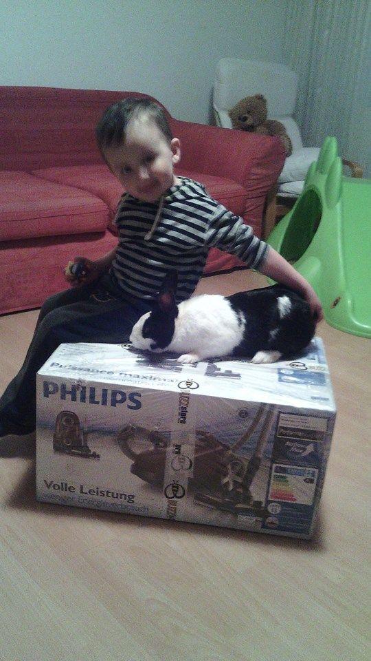 Noul aspirator cu sac Philips Perfomer Expert a ajuns la noi. Il punem in testare, deja am 2 ajutoare:)@TheBUZZStore @Acasa cu Philips