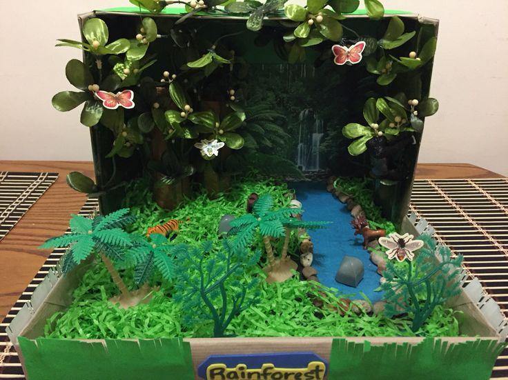 Rainforest in a shoebox rainforest pinterest rainforests for Habitat container