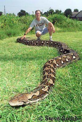 World's Biggest Snake | world biggest snake world biggest snake in the world the biggest snake ...