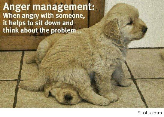 humorous quotes pin | Dogs with sayings - Funny Pictures, Funny Quotes, Funny Videos - 9LoLs ...