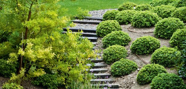 Turning garden banks into attractive, manageable areas Gardening - New Zealand Woman's Weekly