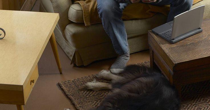 Como impedir cães de arranhar o assoalho. Os assoalhos são feitos de madeira natural. Os pisos são lisos e polidos para maior durabilidade, mas são facilmente danificados pelas unhas afiadas dos cães. O peso de um cão, mesmo um pequeno, com suas longas unhas, pode causar estragos no revestimento devido aos profundos arranhões. A remoção dessas marcas é cara, sendo mais fácil proteger o ...