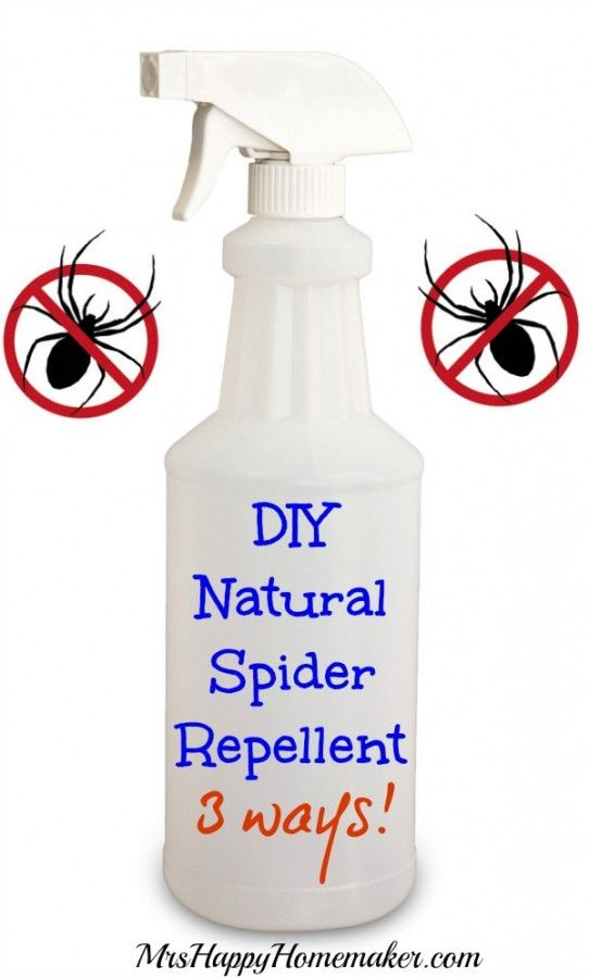 DIY Natural Spider Repellent, 3 Ways!