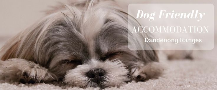 Dog Friendly Accommodation in the Dandenong Ranges Victoria