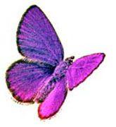 perhonen.jpg (165×180)