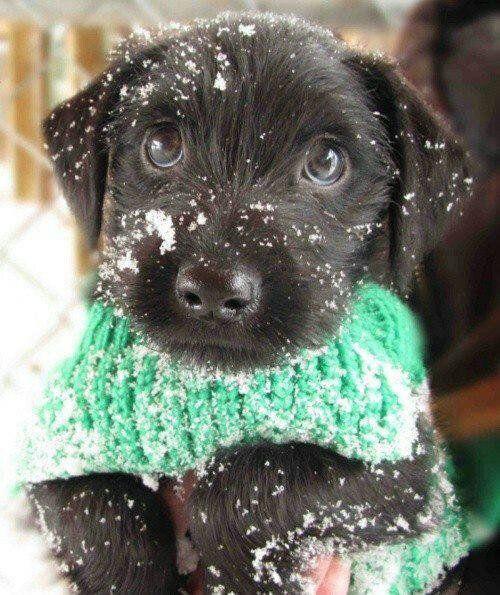 ชนันต์ แดงประไพ - Google+ - Brrrr que frio...