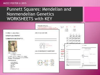genetics punnett squares mendel non mendelian student worksheets with key student squares. Black Bedroom Furniture Sets. Home Design Ideas