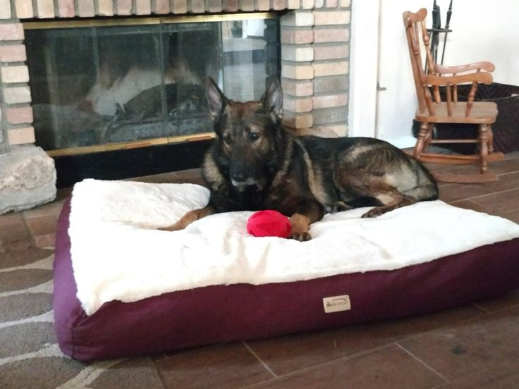 Simien Large And Xl Dog Bed