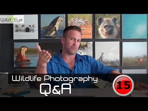 Wildlife Photography Q&A: Episode 15