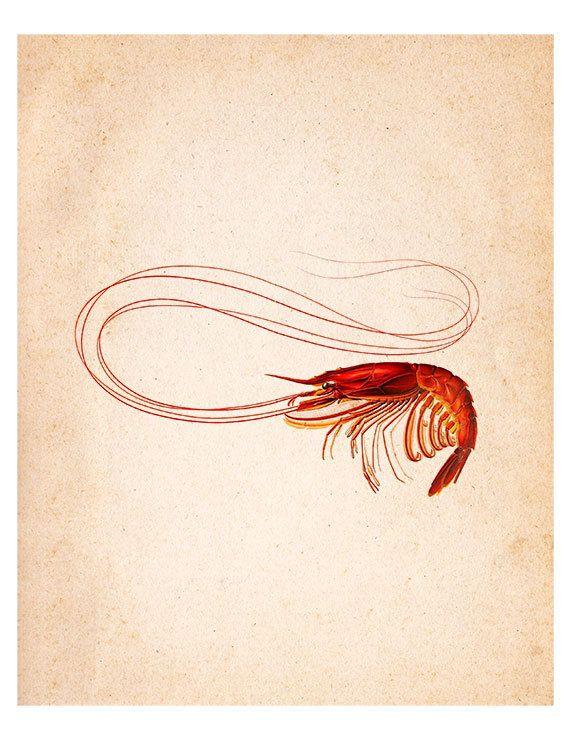 Red Shrimp Vintage Illustration Wall Decor Print 8 x 10 (sda024). $9.95, via Etsy.