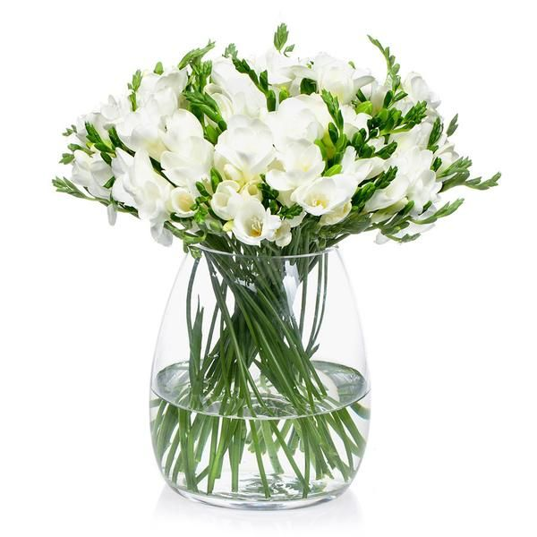 Freesias, fill your home with this seasonal sweet fragranced, cut flower available to order online from Bill's.