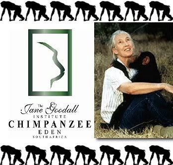 Chimp Eden - Jane Goodall Institute.  Animal Planet show - Escape to Chimp Eden with Eugene Cussons