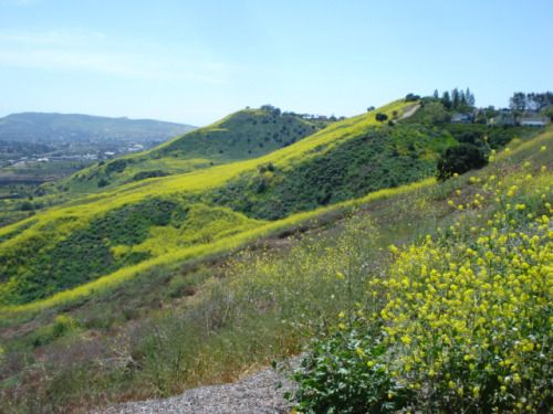 Colinas Bluff Trail. A beautiful trail to see the Capistrano Valley stretched out before you. I recommend that you hike this trail in the winter, to see the snow on Saddleback peak and the San Gabriel Mountains and again in the spring when the hills are awash with bright yellow mustard weed.