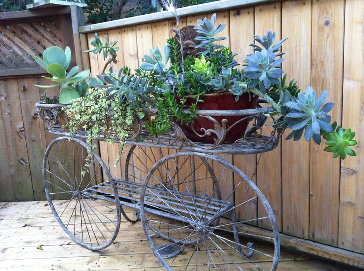 diy plants in faux birdcages - Google Search