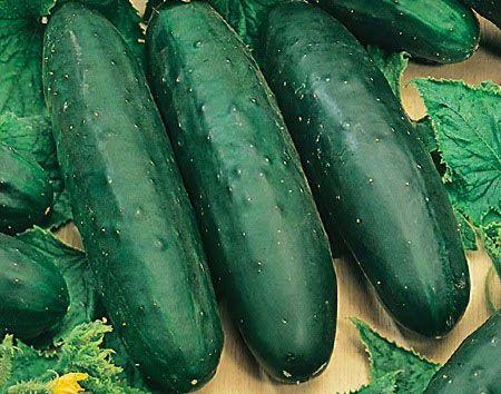 Садоводство: Сорта огурцов