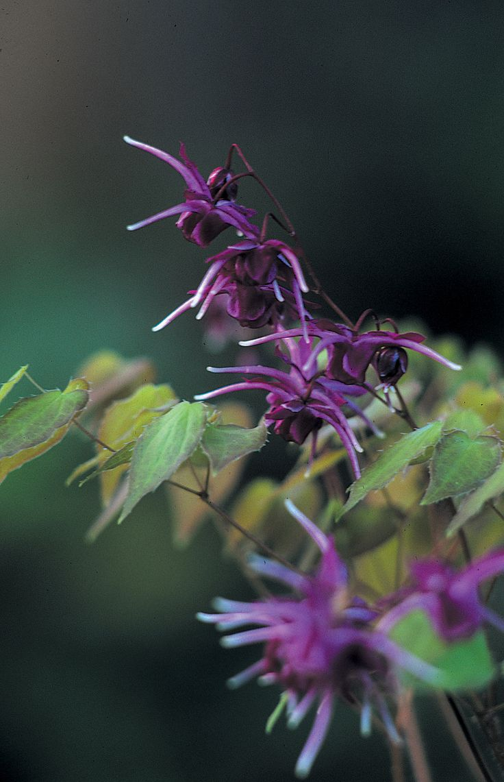 44 best interesting plants images on pinterest flowers