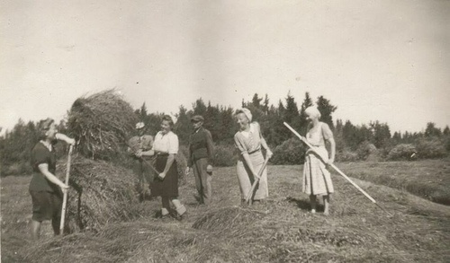 Collecting hay - the women wore skirts to work in the fields in the old days.....
