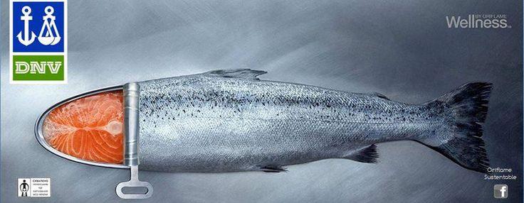 ¿POR QUÉ CONSUMIR OMEGA 3 DE WELLNESS ORIFLAME?  Las especies utilizadas para elaborar este aceite son sardinas y anchoas del Océano Atlántico. El aceite de pescado estable y natural es encapsulado de inmediato en cápsulas de gelatina de pescado a fin de garantizar su frescura y alta calidad.  El omega 3 ha sido objeto de destilación molecular y está libre de metales pesados y otros contaminantes.