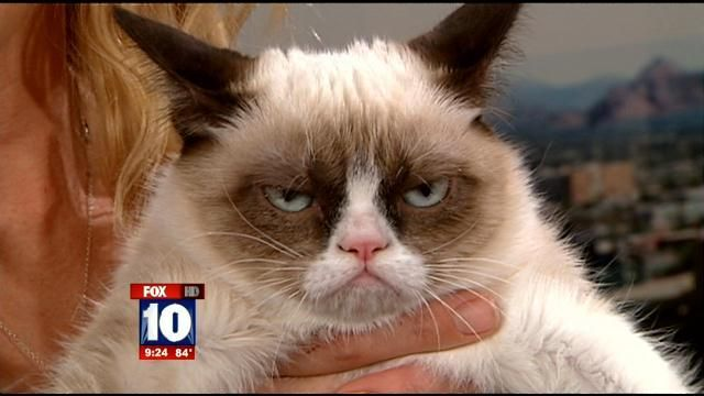 Grumpy Cat on the 'Today' Show (see video on link)