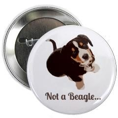 Click the pic to see this pawsome Entlebucher Mountain Dog button in my shop *waggy tail*